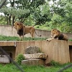 fabulous lion brothers