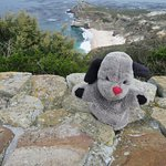 Visitor to Cape Point