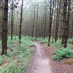 Forest Holidays Sherwood Forest ภาพถ่าย