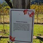 Foto de Dal Pizzol Vinhos Finos