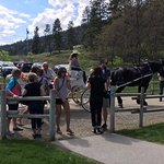 Celebration of Neighbours - carriage ride