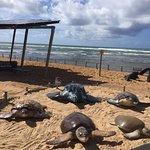 Foto de Projeto Tartarugas Marinhas (Tamar)