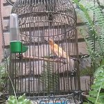 Beautiful Songbird in a horribly tiny cage