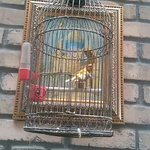 And another caged bird in a very unsuitable condition.