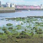 Лебеди в бухте Галвея неподалёку от впадения канала
