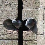 arrow slit pigeon home!