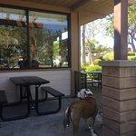 Snapper Jack's Taco Shack Photo