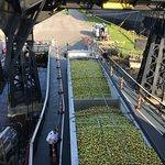 Wisconsin apples, the secret ingredient of Michigan cider.