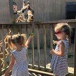 Sedgwick County Zoo-bild