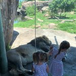 Sedgwick County Zoo照片