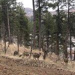 More deer on the hillside