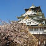 Cherry Blossom & Main Castle