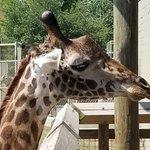 Foto de Cameron Park Zoo