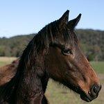 Equine resident
