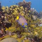 Foto de Deep Life Divers