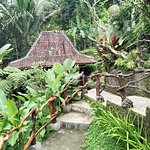 DD Ubud Jungle Villa ภาพถ่าย