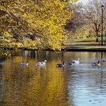 Caulfield Park resmi