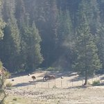 horses in corral visible from main lodge terrace