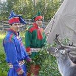 reindeer program and sami culture