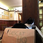 always make time to say hello to pubcat