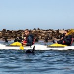 Huge colony of seals to kayak amongst