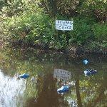 """""""Beware of the crocs"""""""