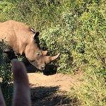 Tim Brown Tours - Durban Safari Tours照片