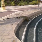 Iguana visiting the pool