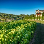 Winery Kabola with wineyards