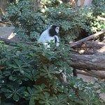 Limassol Zoo照片