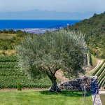 Sea view from Kabola Winery