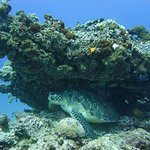 Great underwater photographer!
