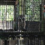 Peace River Wildlife Center resmi