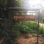 Mowgli Cottage Image