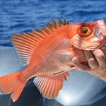 Caribbean fish can be very colorful