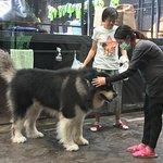 Big Dog Cafe Photo