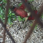 rotting dead artificial parrot