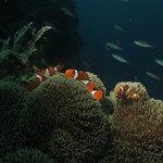 Alona Divers at Pamilacan Island Today