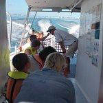 John Pennekamp Coral Reef State Park ภาพถ่าย