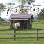 Barn and horse