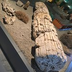 The Natural History Museum of the Lesvos Petrified Forest Foto