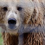 Libearty Bear Sanctuary Zarnesti ภาพถ่าย
