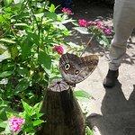 Foto de Jardin Botanico del Quindio