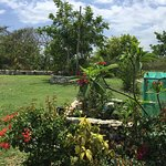 Lewi's sits on1 acre of beautiful land across from the Caribbean Seafront