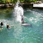 Getting splashed by the dolphins