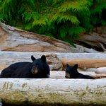 Bears on the beach