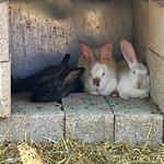 Therianos Family Farm – fotografija