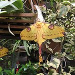 Magic Wings Butterfly Conservatory and Gardens resmi