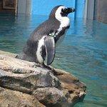 Billede af Turtle Back Zoo