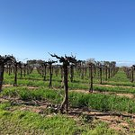 Perfect Day for Wine Tasting in Paso.